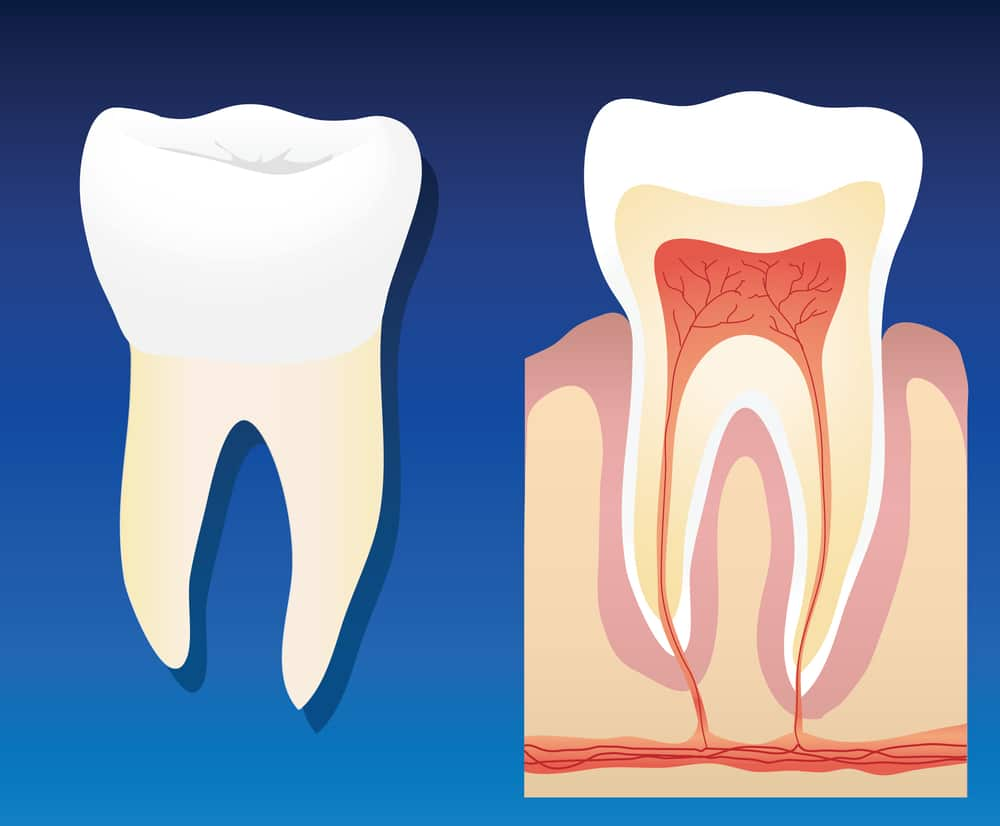Endodontists Take The Bite Out of Root Canals